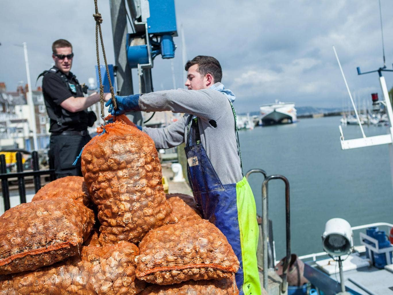 Whelk-come back: hauling whelks in Weymouth Harbour