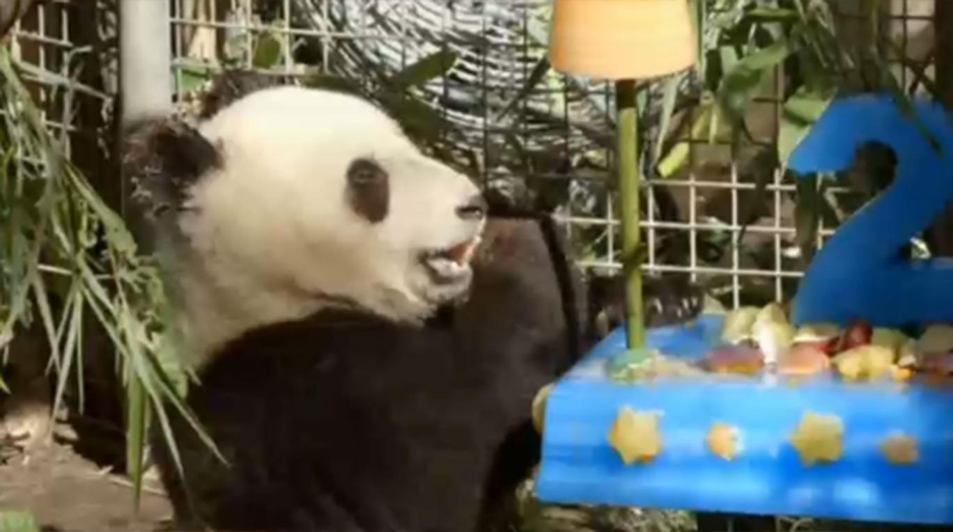 Xiao Liwu enjoys his birthday cake