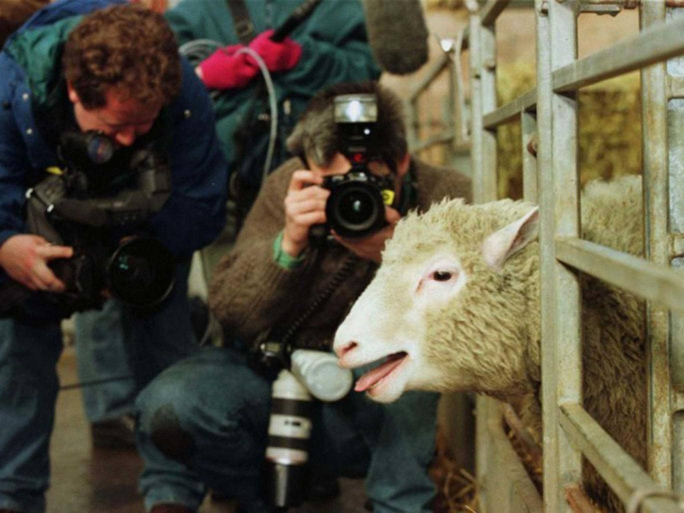 Dolly the first genetically copied sheep meets the press