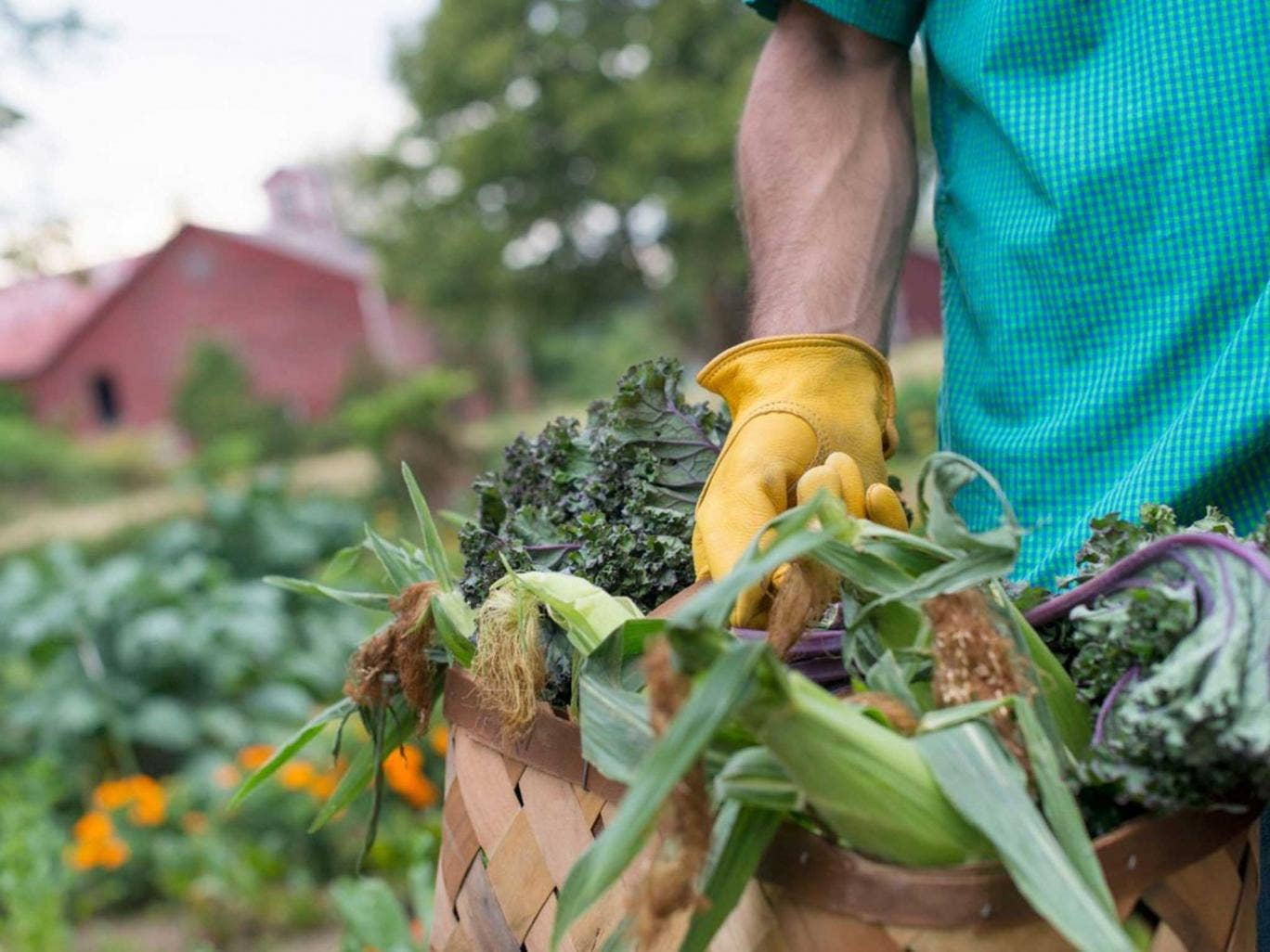 There are no fungicides for vegetables although there are for fruit  and flowers