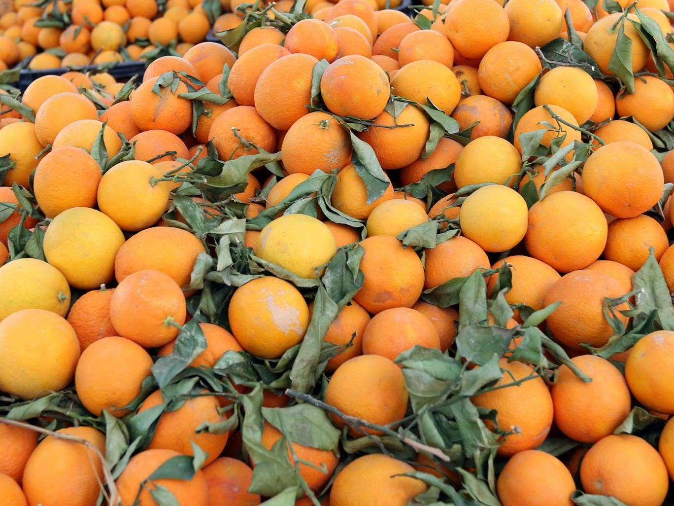 A Libyan vendor arranges his display of oranges at his stall set-up on the side of a main road in the Libyan capital Tripoli, on January 2, 2013.