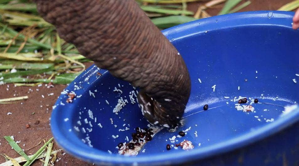 Black Ivory Coffee is made using beans plucked from elephants' waste after ingested by the animals