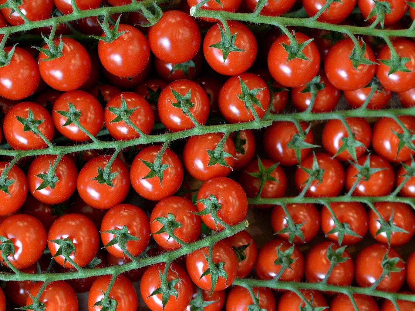 A picture taken on June 13, 2014 shows cherry tomatoes in a local business, in Paris