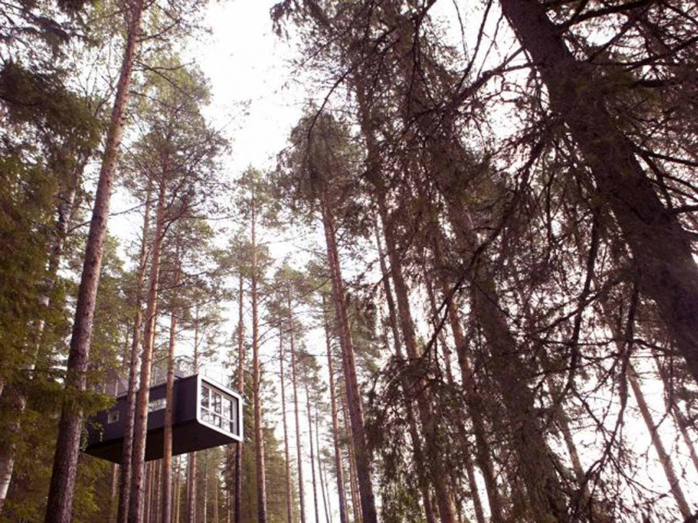 the tree hotel in sweden. Black Bedroom Furniture Sets. Home Design Ideas