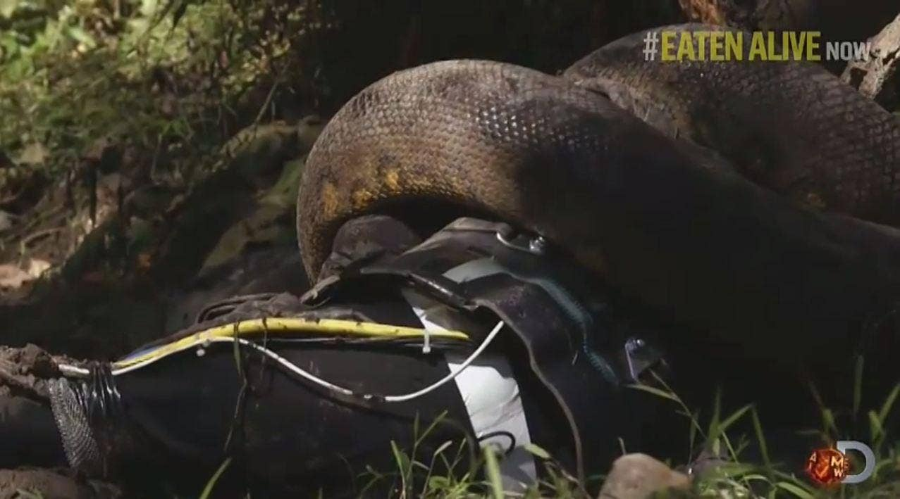 Eaten Alive: This is what a man being eaten by an anaconda ...