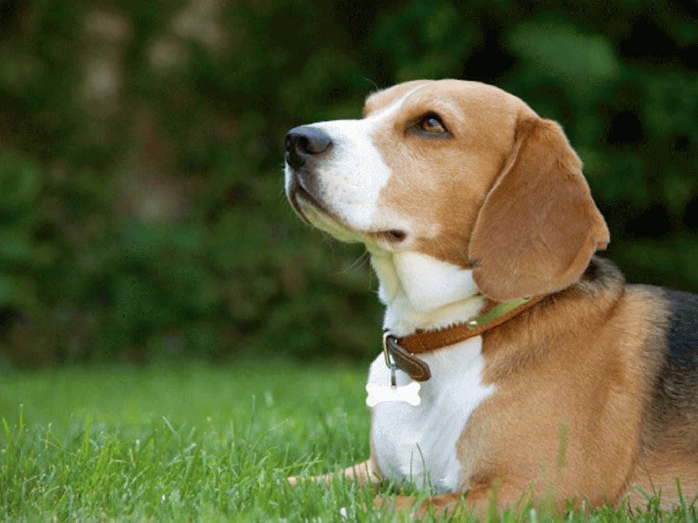 Animal rights dating uk-in-Kavchia