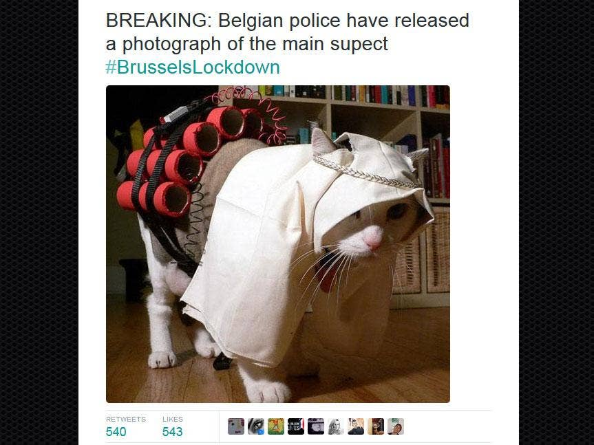 Brussels Lockdown: Belgians tweet pictures of cats to confuse Isis terrorists