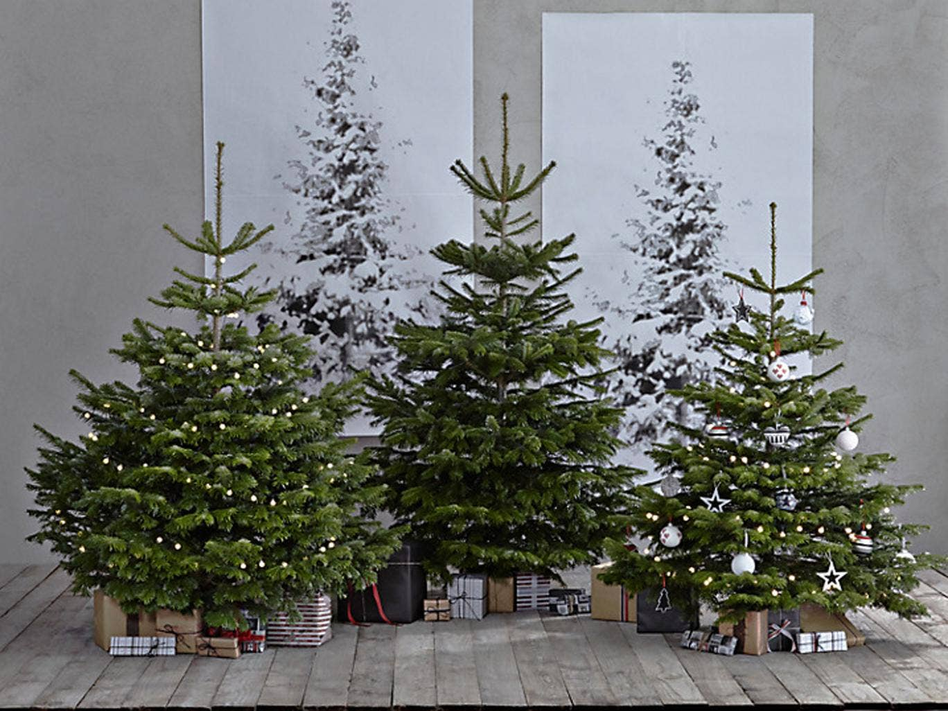 12 Best Real Christmas Trees Christmas Gifts Extras