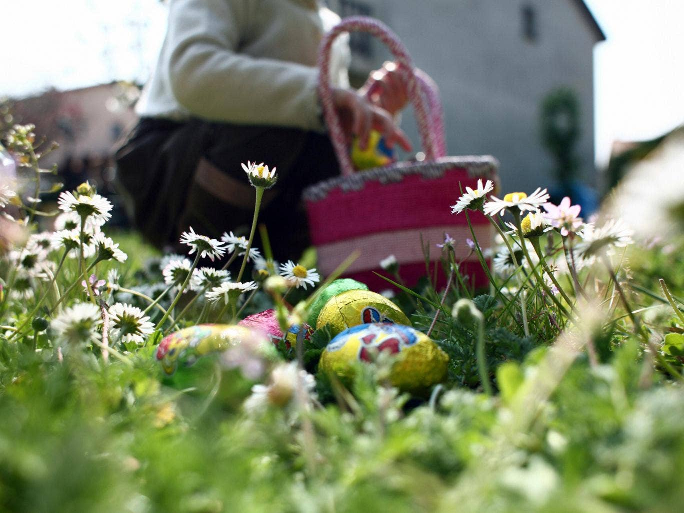 Easter 2016 egg hunt descends into madness as 39 locust 39 parents rush fields and trample children - Cacher les oeufs de paques ...