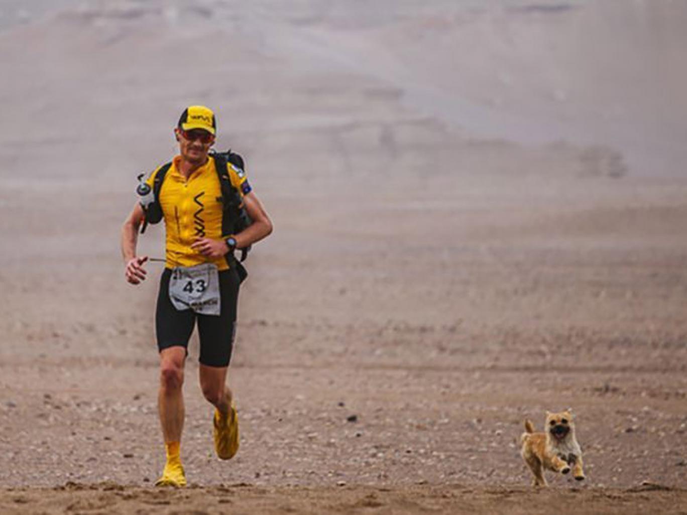 Ultramarathon runner Dion Leonard finally reunited with Gobi the dog after sharing 80-mile China desert trek Gobi-dog-4-deserts-pa