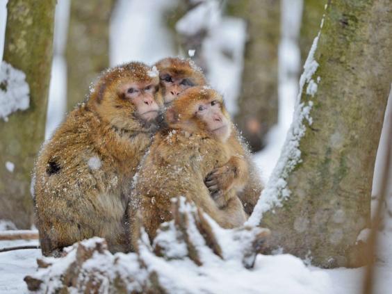 animal-snow3.jpg
