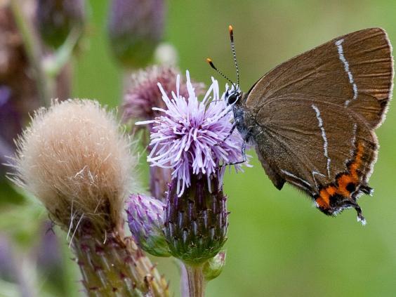 web-butterflies-6-pa.jpg
