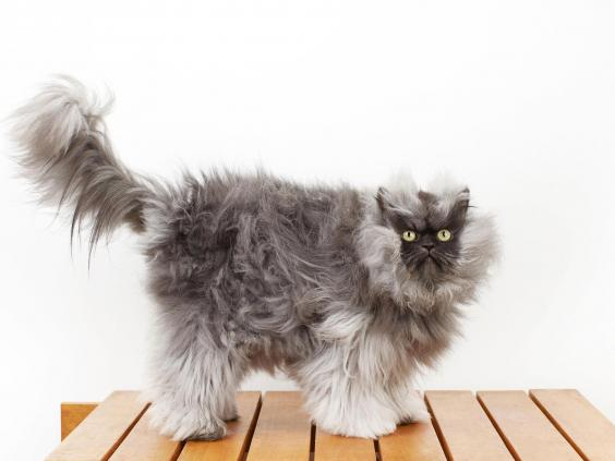 colonel-meow.jpg