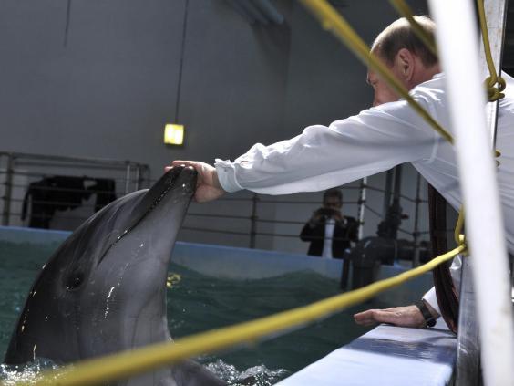 putin-dolphin.jpg