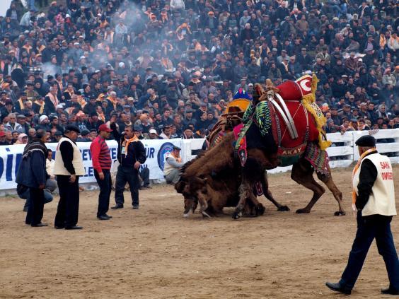 36-animal-fights3-ala.jpg