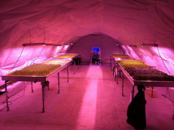 Undergroundfarm.jpg