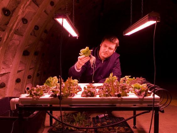 undergroundfarm2.jpg
