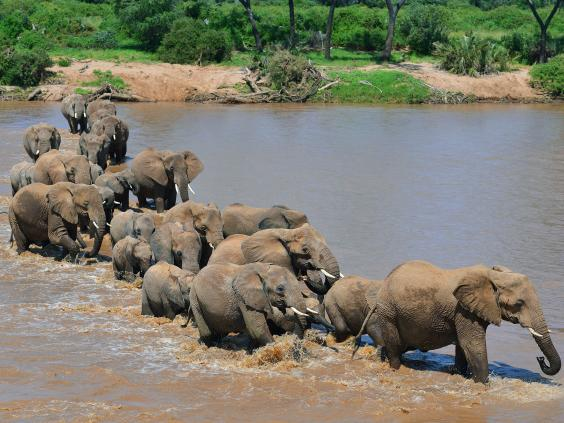 29-Elephants-AFP-Getty.jpg