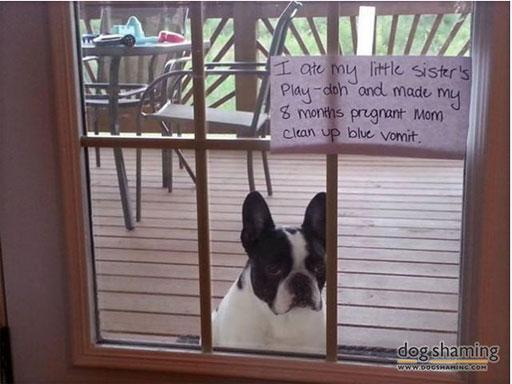 dog-shaming.jpg