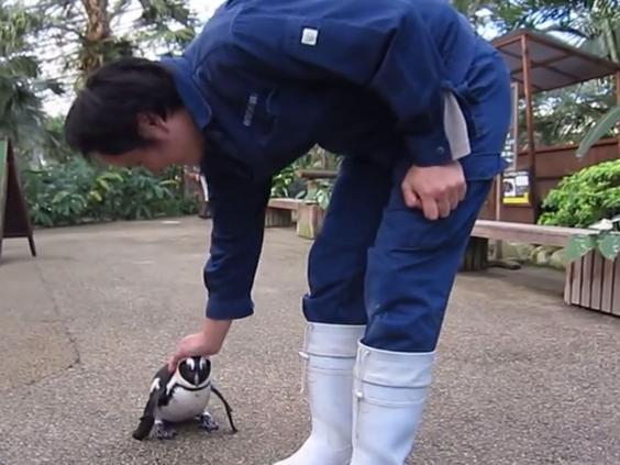 penguin-japan.jpg
