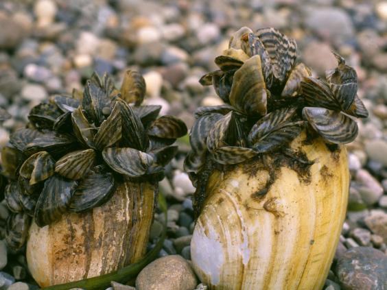 33-Mussels-Alamy.jpg