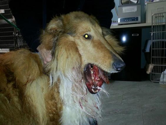 lad-dog-lost-jaw3.jpg