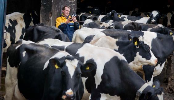 cattle0088.jpeg