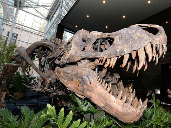 dinosaur-rex.jpg