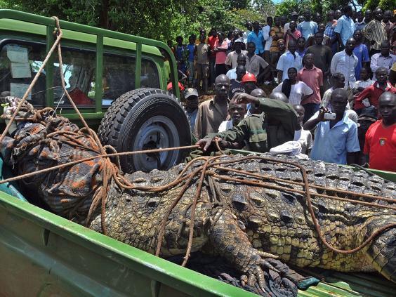 ugandacrocodile.jpg