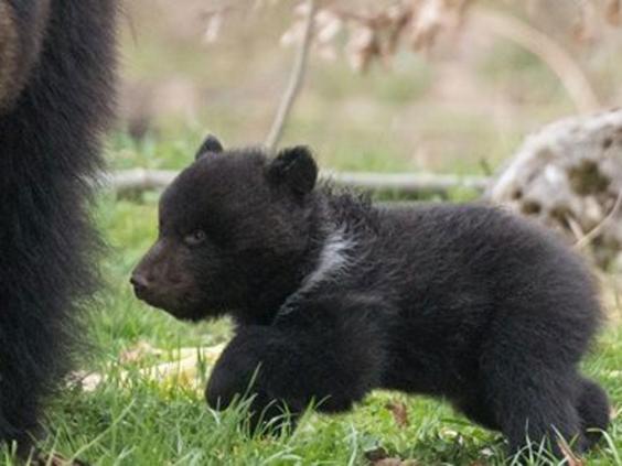 bearcubs.jpg