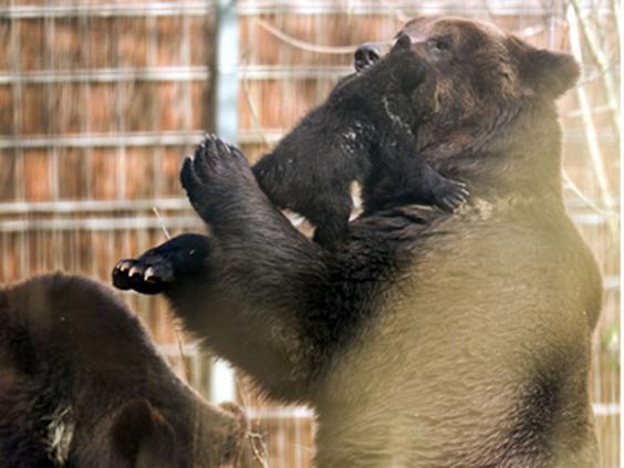 bearcub.jpg