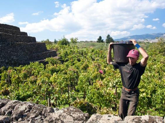 TRA14.wine.afpgt.jpg