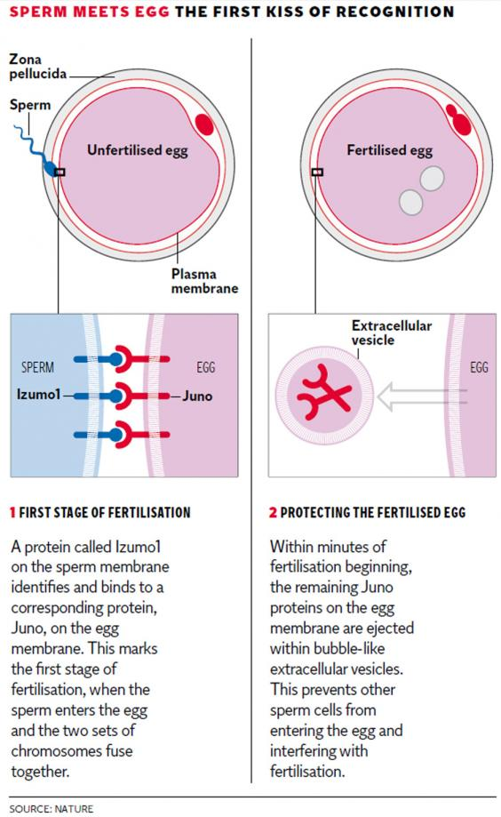 web-sperm-graphic.jpg