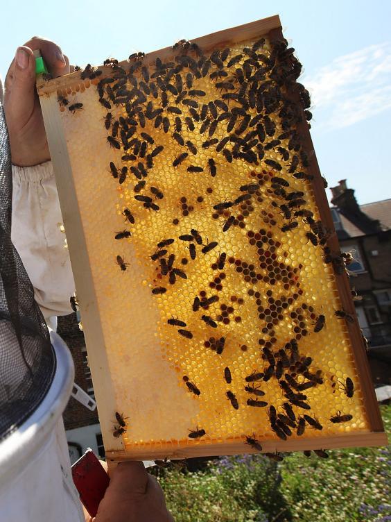 pg-16-bees-2-getty.jpg