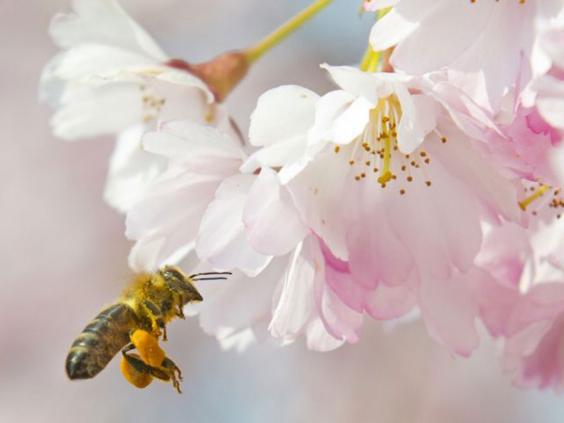Bees-AP.jpg