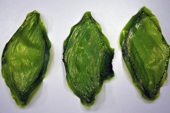Silk-Leaf-by-Julian-Melchiorri_dezeen_04_644.jpg