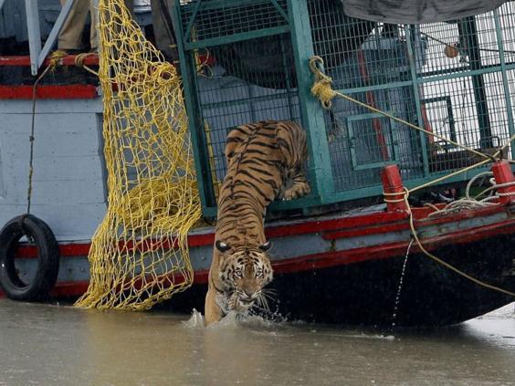 21-tiger-afp.jpg