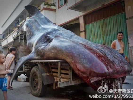 whale-shark-weibo.jpg
