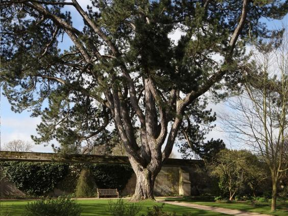 pg-26-tolkien-tree-2.jpg