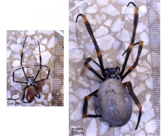 spiders-size.jpg