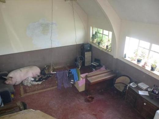pighouse3pig.jpg