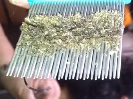 how to keep lice out of your hair