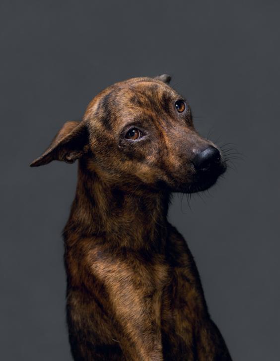 dog3.jpg