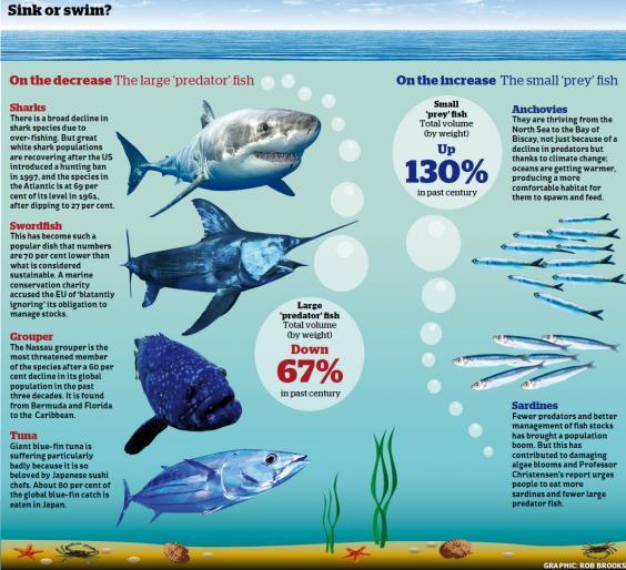 web-fish-graphic.jpg