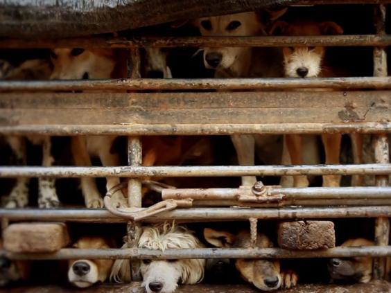 Dog-campaign.jpg