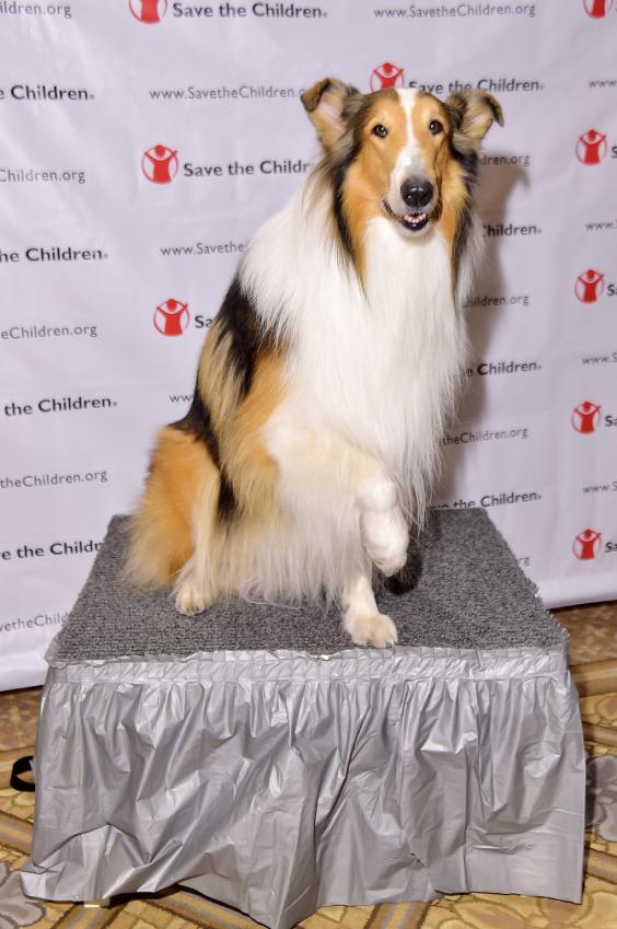 Lassie-Getty.jpg