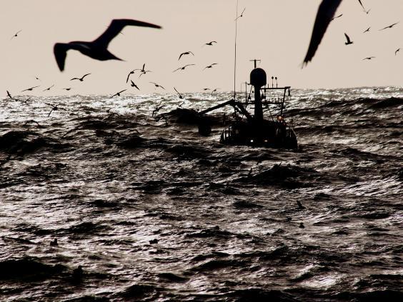 8-fishing-vessel-Rex_1.jpg