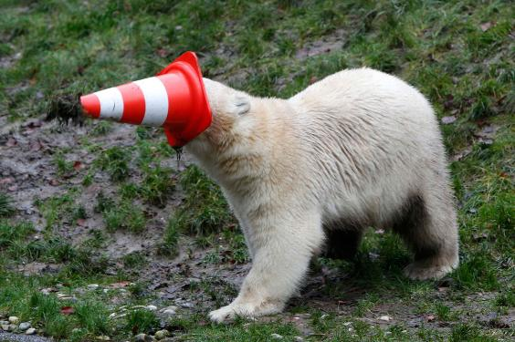 polar-bear-twins2.jpg