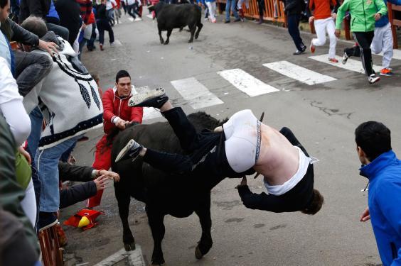 miller-bulls.jpg