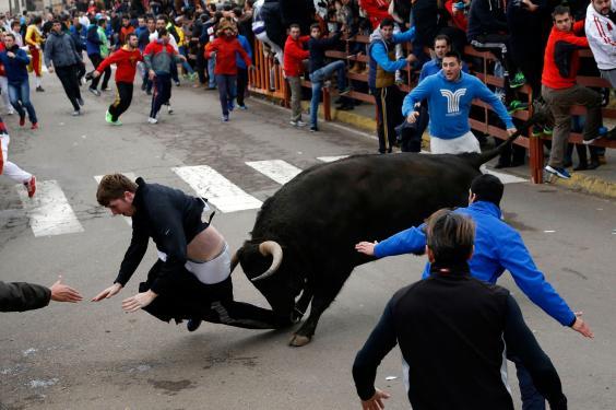miller-bulls2.jpg
